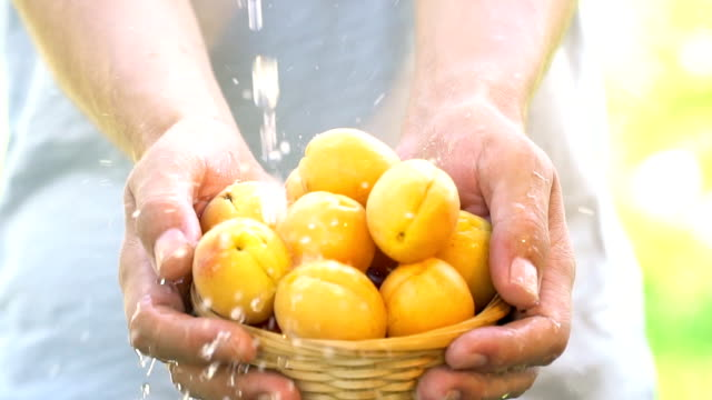 Organic fruit and vegetables. Farmer hands with freshly harvested fruit and vegetables. Apricot - Slow Motion