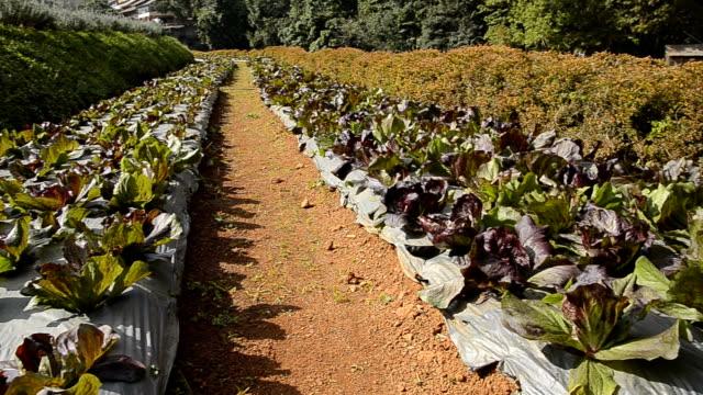 vídeos de stock e filmes b-roll de hd: jardim orgânicos - hd format