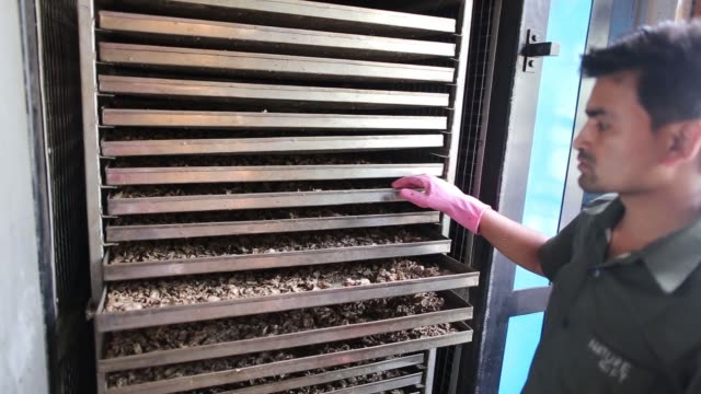 organic ginger is collected in a plastic box through a processing machine at the nature's gift processing plant in rangpo east sikkim india on... - cable box stock videos and b-roll footage