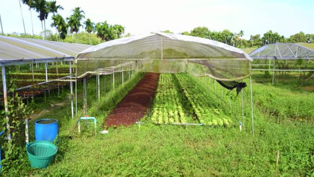 有機水耕栽培農場。 - グリーンハウス点の映像素材/bロール