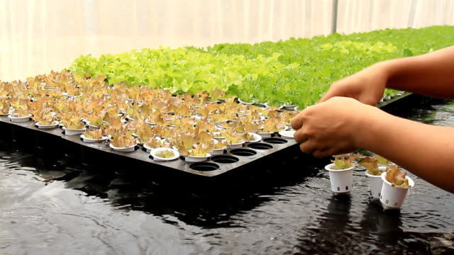 organic hydroponic vegetable farm - vertical stock videos & royalty-free footage