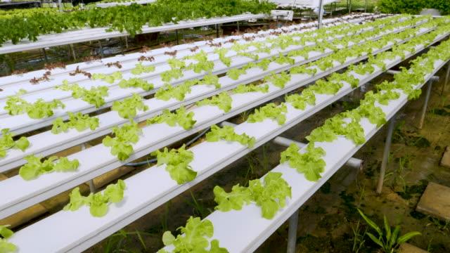 organic hydroponic vegetables - plantation stock videos & royalty-free footage