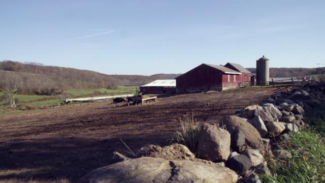 vídeos de stock, filmes e b-roll de organic new england farm - grupo pequeno de animais