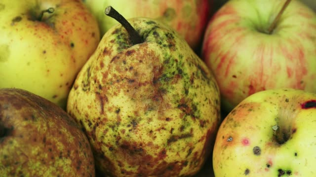 organic pears - pear stock videos & royalty-free footage