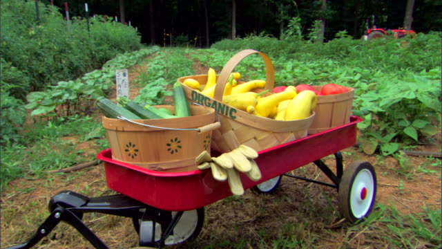 organic produce in wagon - gardening glove stock videos & royalty-free footage