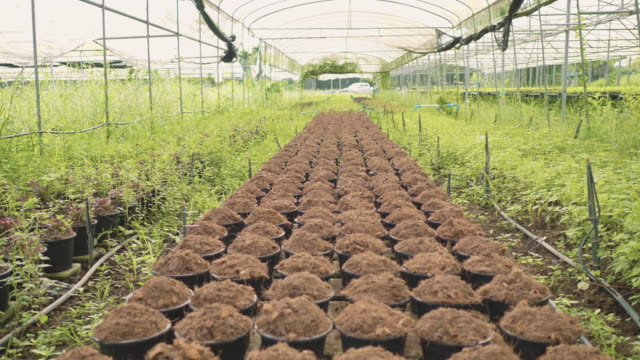 Organic soil.