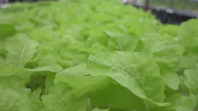Bio-Gemüse im Garten