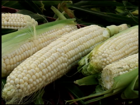 stockvideo's en b-roll-footage met organic white corn, sweet-corn, maize - vijf dingen