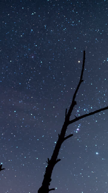 orion and sirius in a winter sky over a bare tree (vertical/time lapse/panning) - bare tree stock-videos und b-roll-filmmaterial