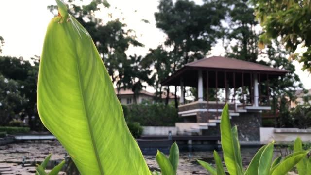 ornamental garden pond relax zen exterior shady - philosophy stock videos & royalty-free footage