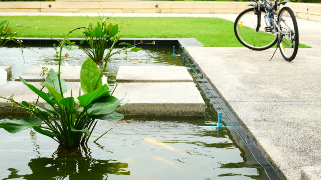 ornamental garden pond relax zen exterior shady - standing water yard stock videos & royalty-free footage
