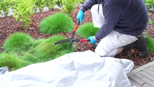 ornamental grass pruning - gartenhandschuh stock-videos und b-roll-filmmaterial