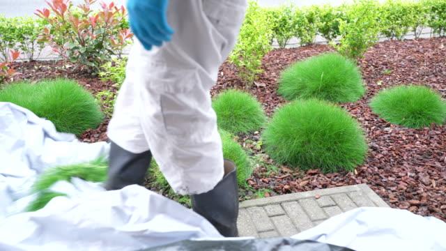 ornamental grass pruning - gardening glove stock videos & royalty-free footage