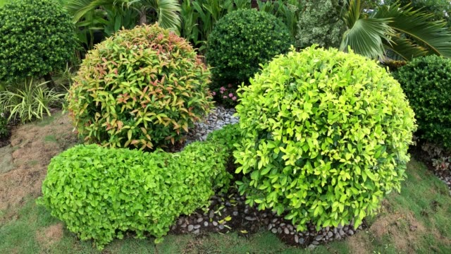 ornamental plant bush in garden - decoration stock videos & royalty-free footage