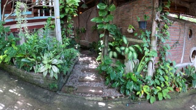 観賞植物屋内庭園 - 観葉植物点の映像素材/bロール