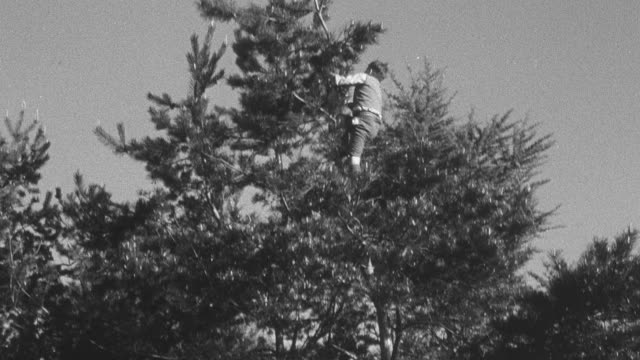 1950 tu orphans climbing tree / united kingdom - foster care stock videos & royalty-free footage