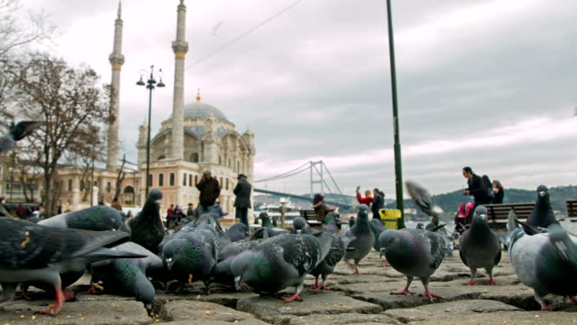 ortakoy mosque and pigeons - ortakoy mosque stock videos and b-roll footage