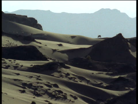 oryx stands silhouetted on sand dune, namibia - hooved animal stock videos and b-roll footage