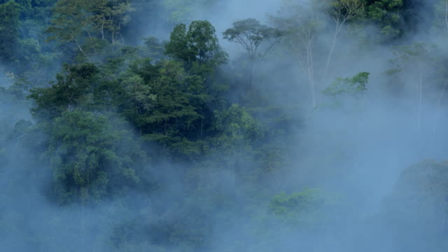 osa peninsula, costa rica - rainforest stock videos & royalty-free footage