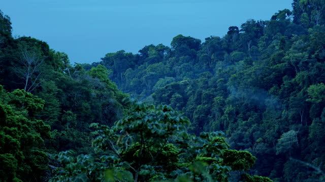 osa peninsula, costa rica - biodiversity stock videos & royalty-free footage