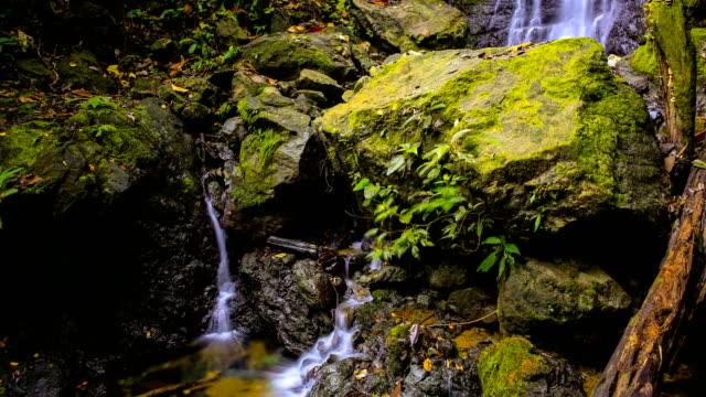 vidéos et rushes de péninsule d'osa, costa rica, chute d'eau - corcovado