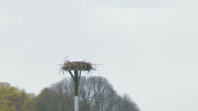 osprey in the nest 2 - hd 30f - osprey stock videos & royalty-free footage