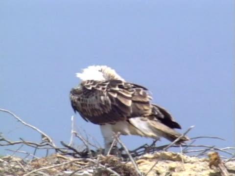 osprey mcu on eerie standing up - ペルシャ湾点の映像素材/bロール