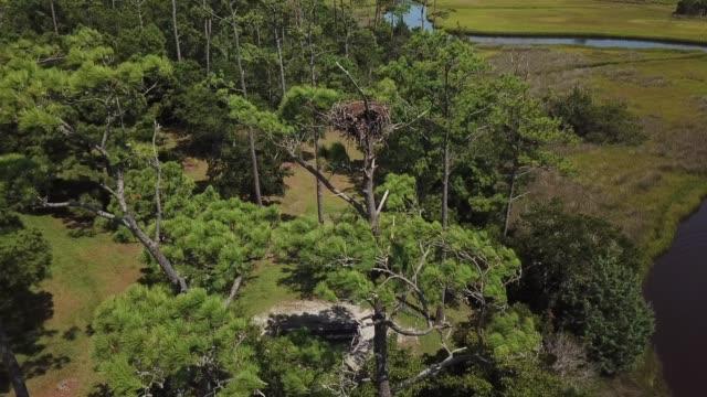 osprey nest - ミサゴ点の映像素材/bロール