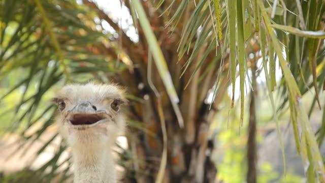 ostrich head - emu stock videos & royalty-free footage