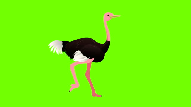 ostrich  run cycle - emu stock videos & royalty-free footage