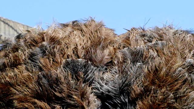 ostrich - emu stock videos & royalty-free footage