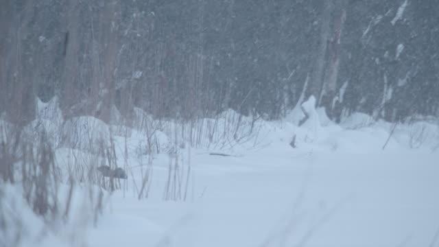 otter (lutra lutra - europäischer fischotter stock-videos und b-roll-filmmaterial
