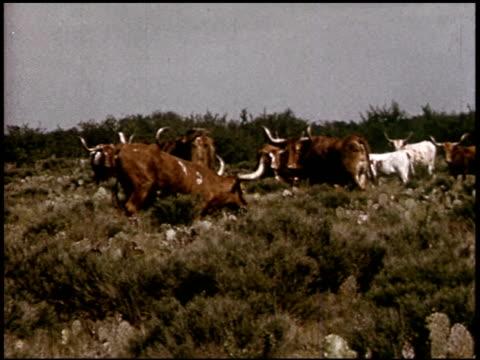 our texas heritage - 14 of 16 - この撮影のクリップをもっと見る 2241点の映像素材/bロール