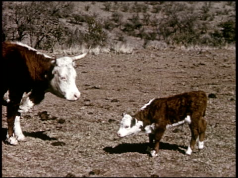 our texas heritage - 15 of 16 - この撮影のクリップをもっと見る 2241点の映像素材/bロール