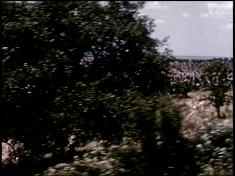 our texas heritage - 4 of 16 - この撮影のクリップをもっと見る 2241点の映像素材/bロール