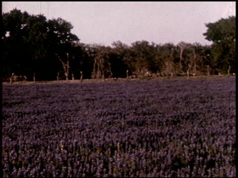 our texas heritage - 8 of 16 - この撮影のクリップをもっと見る 2241点の映像素材/bロール