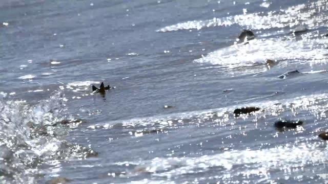 out focus of sea waves - gezeitentümpel stock-videos und b-roll-filmmaterial