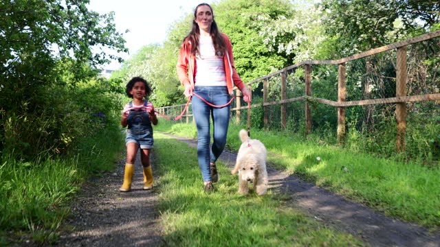 out for a dog walk - mammal stock videos & royalty-free footage