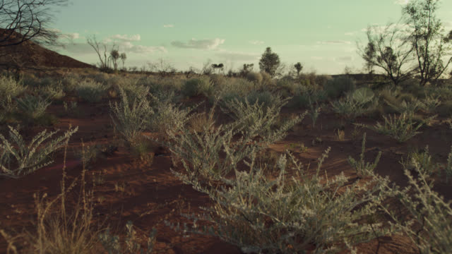 outback at sunrise, australia. - outback stock videos & royalty-free footage