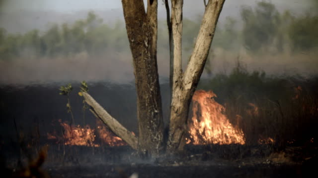 outback bush fire, grass and trees burning - incendio video stock e b–roll