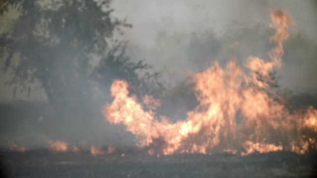 outback bush fire, grass and trees burning - waldbrand stock-videos und b-roll-filmmaterial