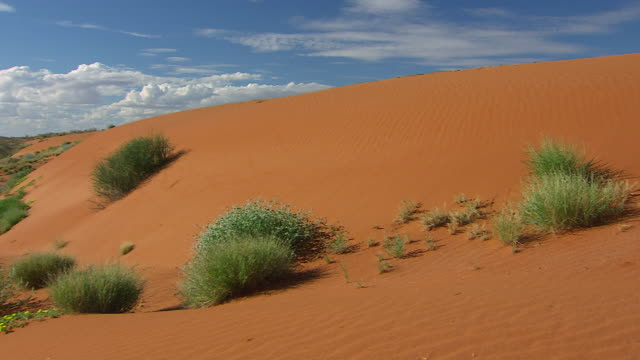 MS Outback desert / Innamincka, South Australia, Australia