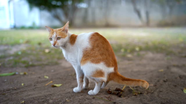 outdoor pooping cat - defecating stock videos and b-roll footage