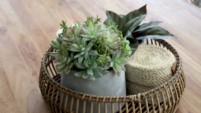outdoor succulent plants on timber table - home decor - decor stock videos & royalty-free footage