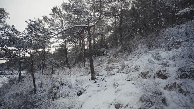 vídeos y material grabado en eventos de stock de al aire libre en invierno: paisaje forestal cubierto de nieve en un día soleado - the nature conservancy