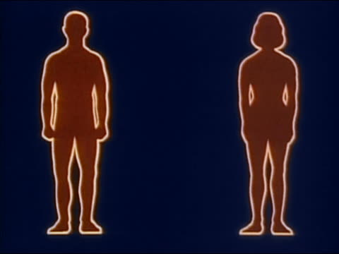 1982 ANIMATED outlines of male and female figure / pelvic regions being highlighted + glowing