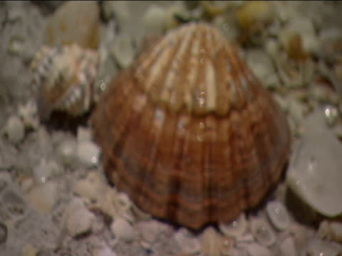 out-of-focus shells on beach pull to sharp focus back to out-of-focus - tierhaut stock-videos und b-roll-filmmaterial