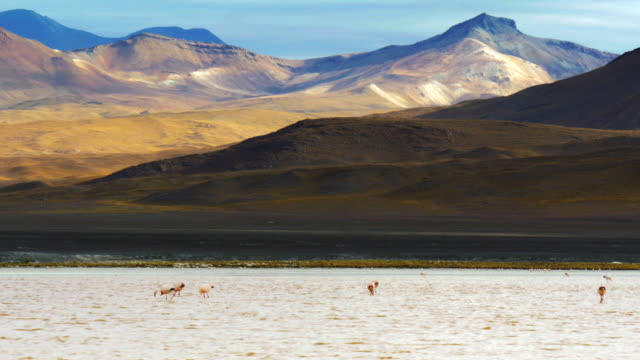 Outstanding landscape in the Andes during sunset with a group of flamingos feeding on the lake