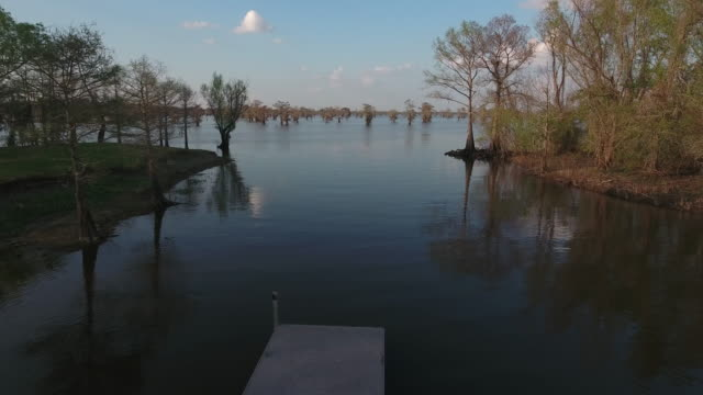 over airboats to swamp reveal - drone aerial 4k everglades, swamp bayou with wildlife alligator nesting ibis, anhinga, cormorant, snowy egret, spoonbill, blue heron, eagle, hawk, cypress tree - drone aerial view - bayou lafourche stock-videos und b-roll-filmmaterial