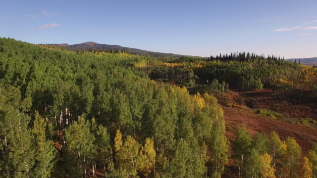 Over aspen tree tops, Aerial, 4K, 12s, 27of34, Aspen Trees, Foliage, Mountains, Beautiful Colors, Changing leaves, Colorado, Aerial, Stock Video Sale - Drone Discoveries 4K Nature/Wildlife/Weather Drone aerial video